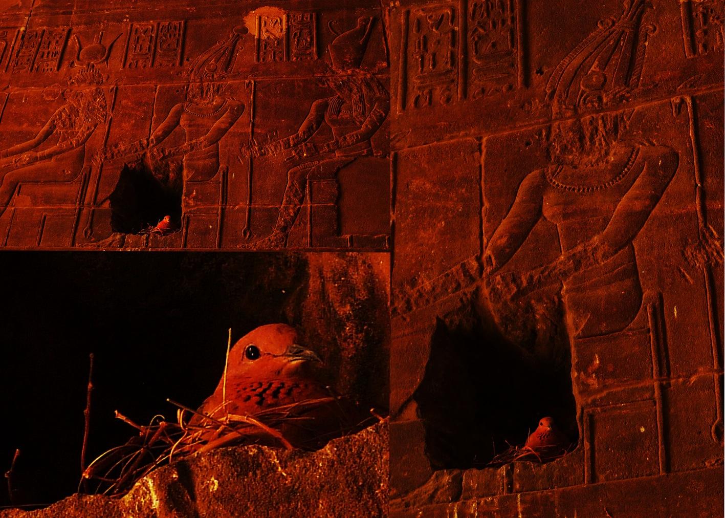 Isis_Temple_Philae_8