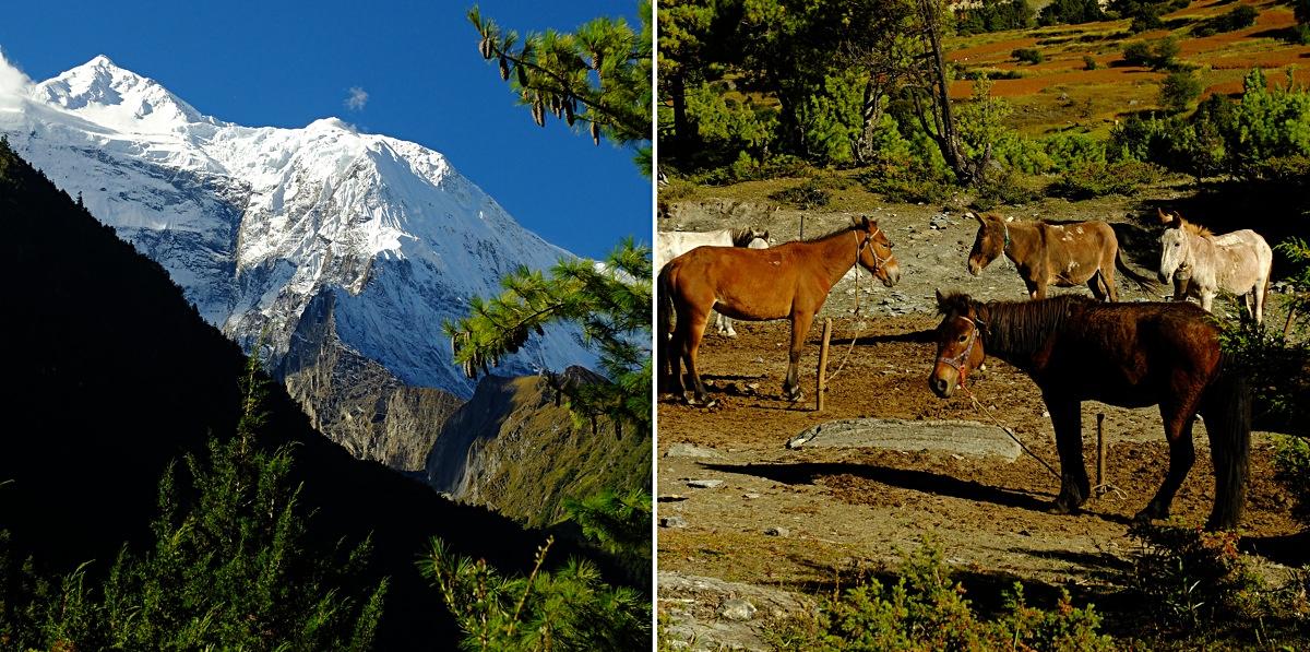 Trekking_Annapurna_15