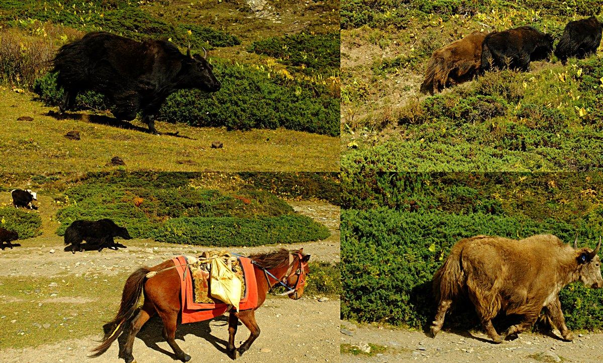 Annapurna_Nepal_28