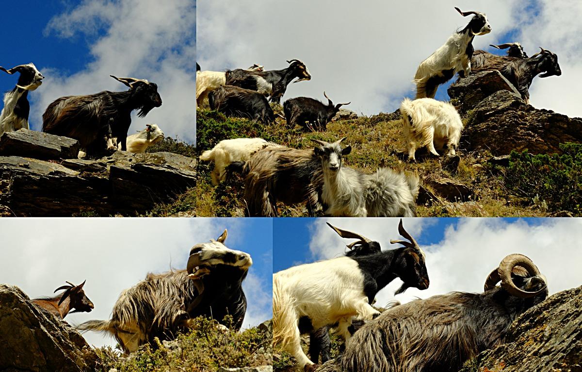 Annapurna_Trail_32