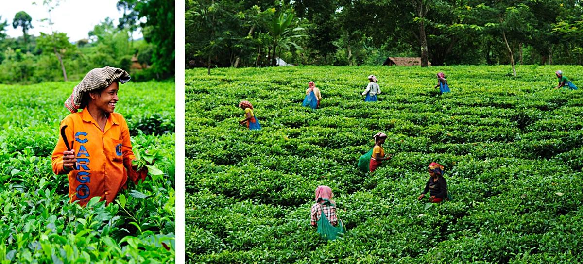 Tripura_India_6