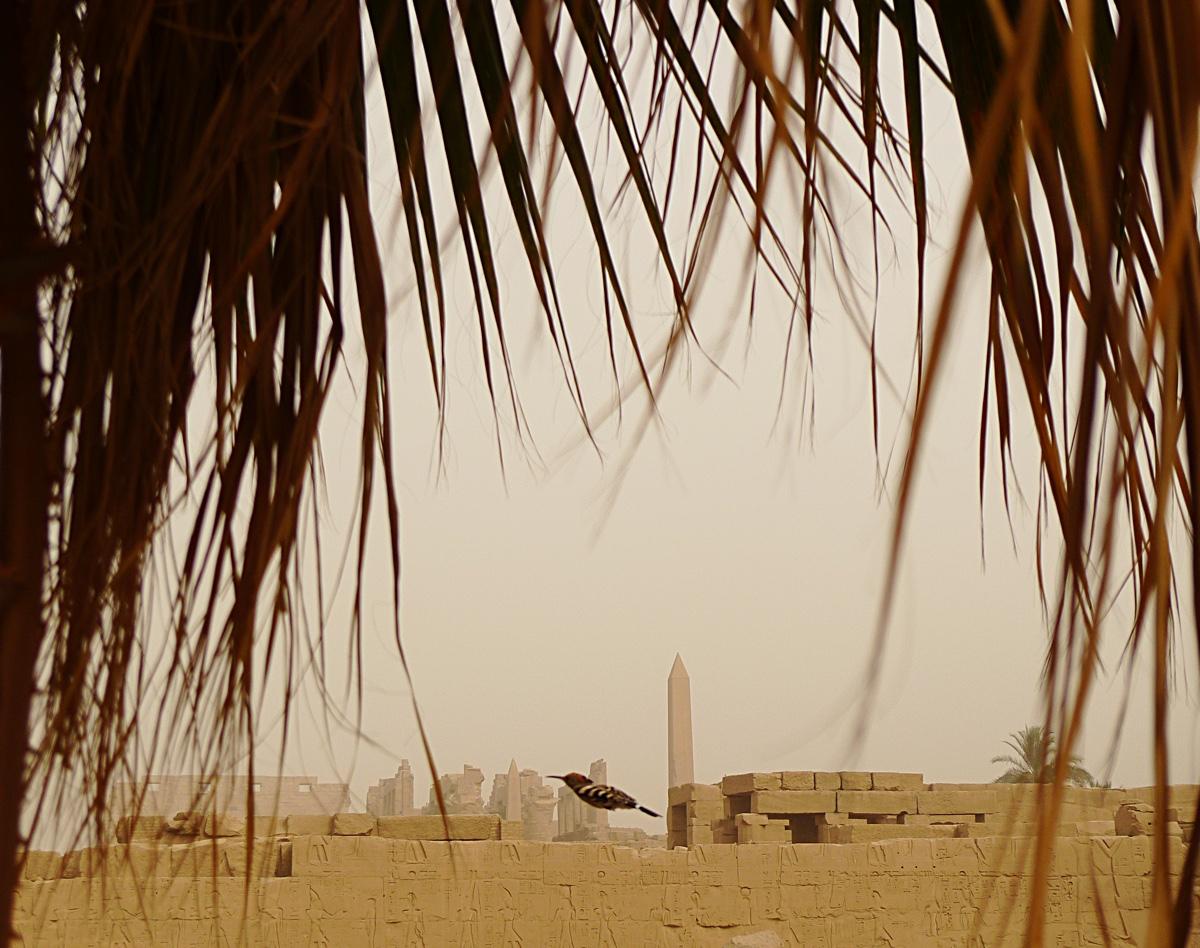 Karnak_Egypt_8